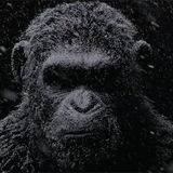 War for the Planet of the Apes is one of the most challenging films in Andy Serkis' career